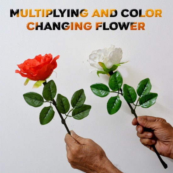 Multiplying & Color Changing Flower